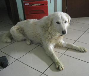 Canina1