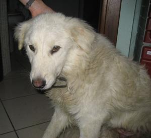 Canina2